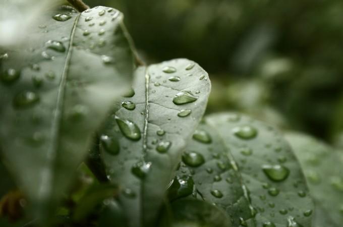 Garden watering solutions
