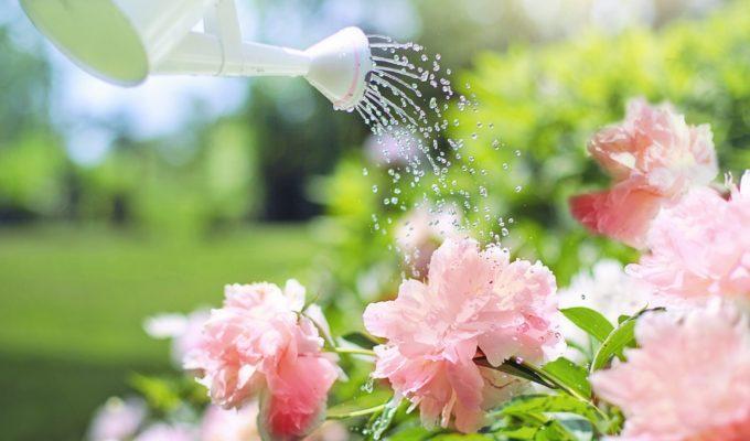 Tips for effective summer garden watering