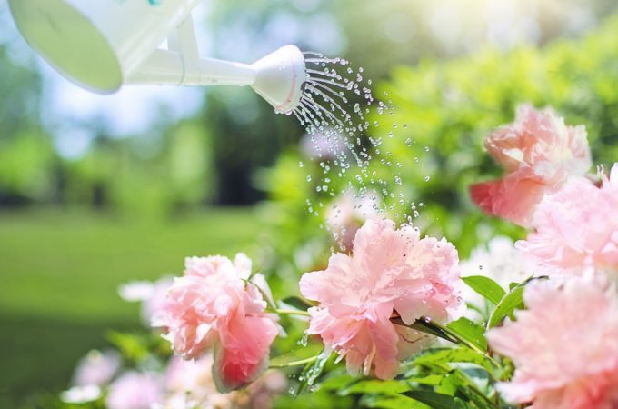Tips for effective summer garden watering