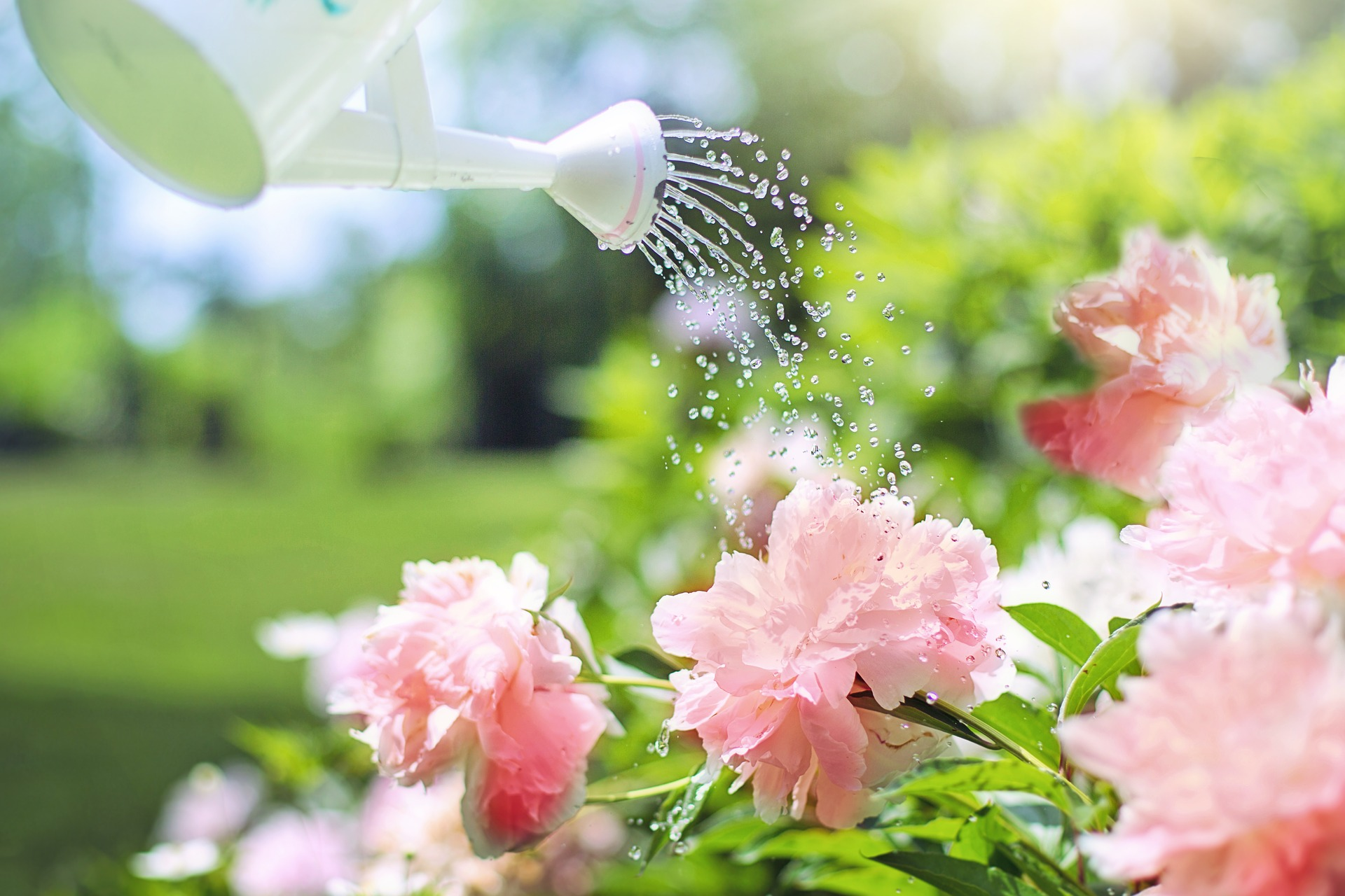 Tips For Effective Summer Garden Watering Growing Family