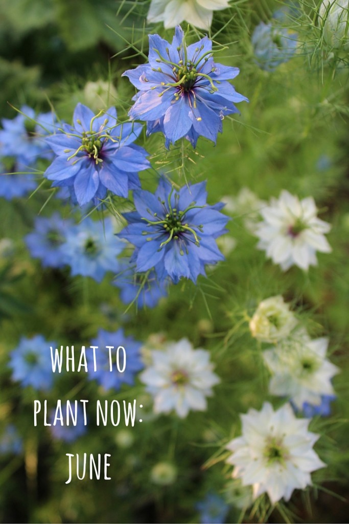 june what to plant now