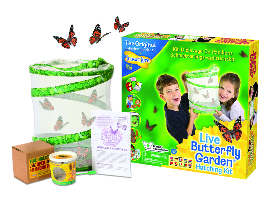 insect lore butterfly garden - Live Butterfly Garden