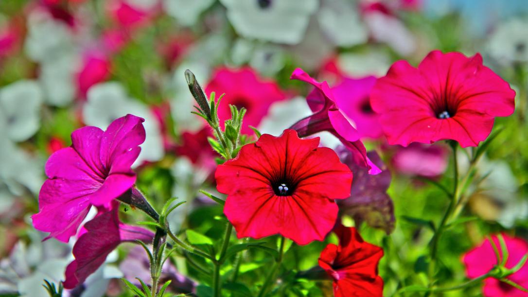 8. The 10 minute gardener