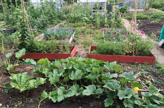 An unruly Summer allotment