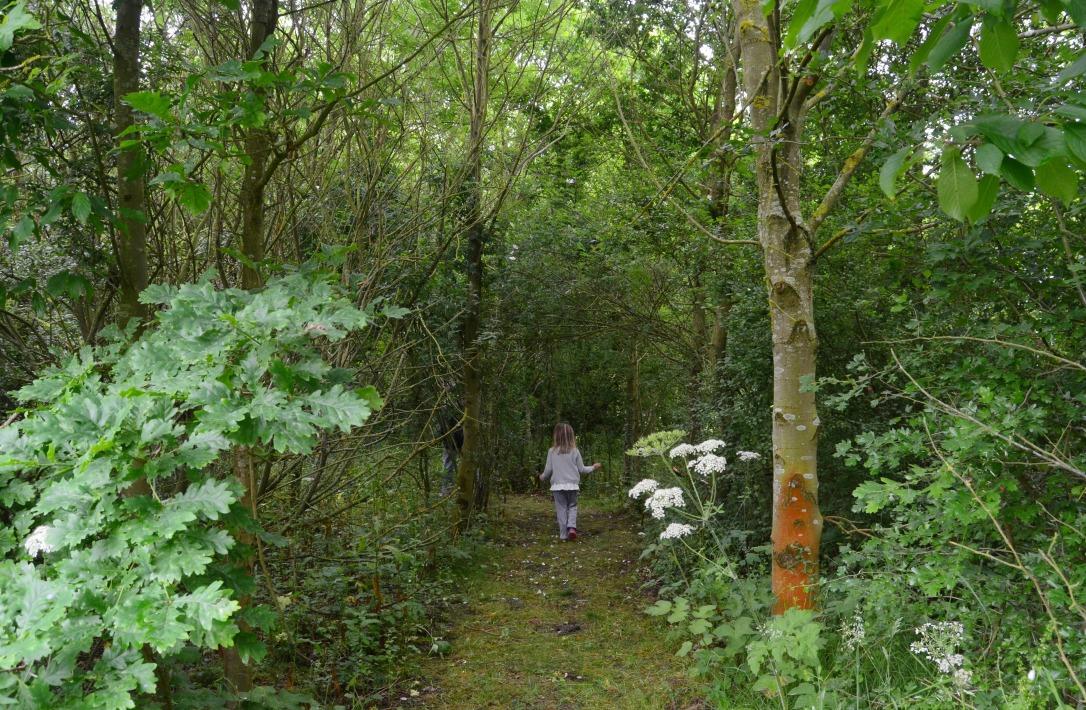 wildflower woodland