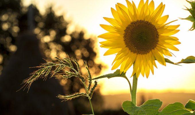 8. The 10 minute gardener: quick gardening jobs for late Summer