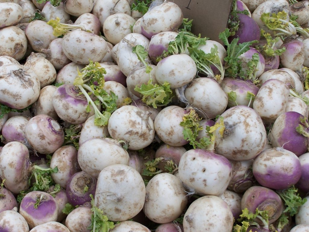 what to plant in july - turnip seeds can be sown in july for harvest later in the year
