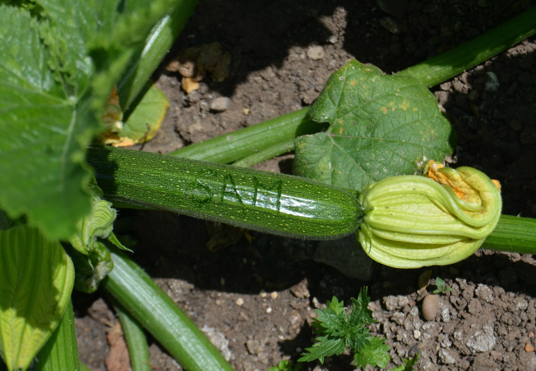 names in courgettes