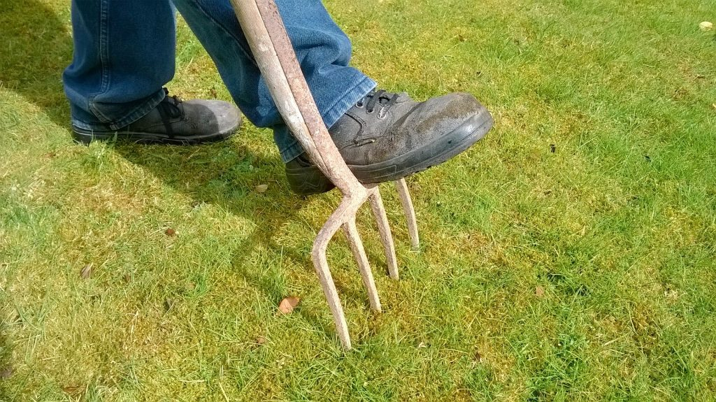 gardening in march - aerating a lawn with a garden fork