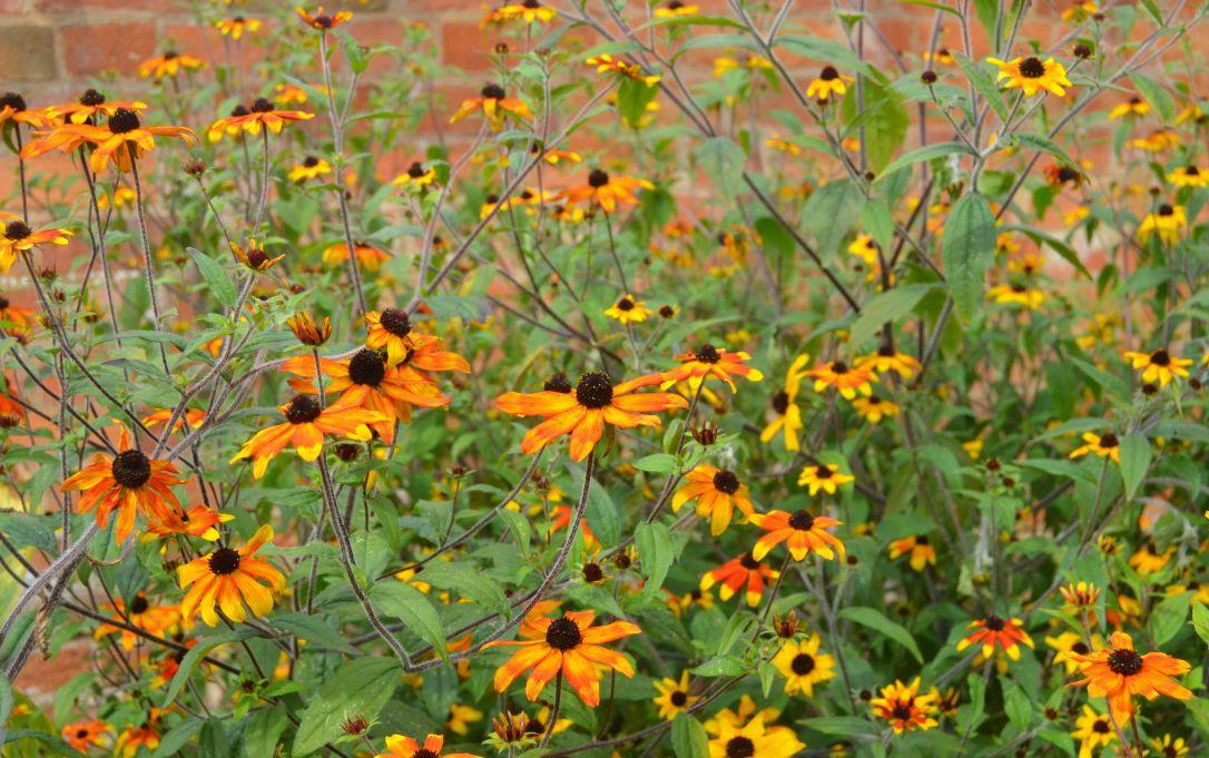 clumber park flowers