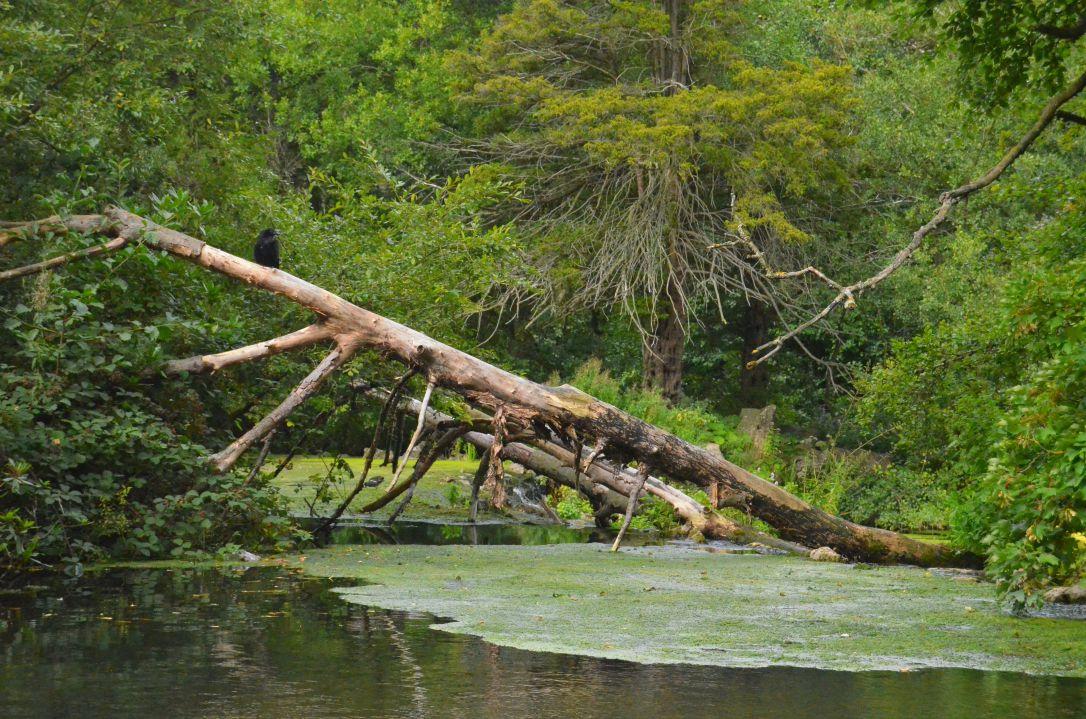 clumber park river