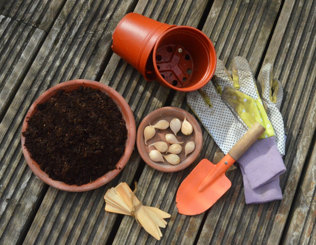 forcing Spring flowering bulbs