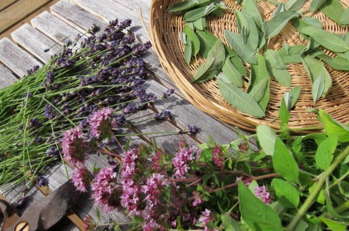 Ideas for preserving herbs