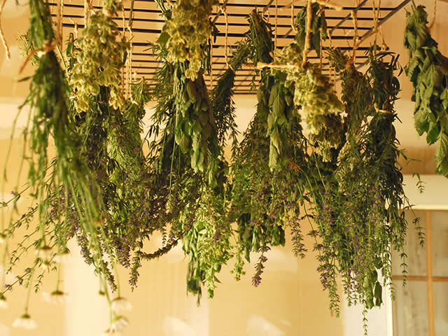 preserving herbs bunches
