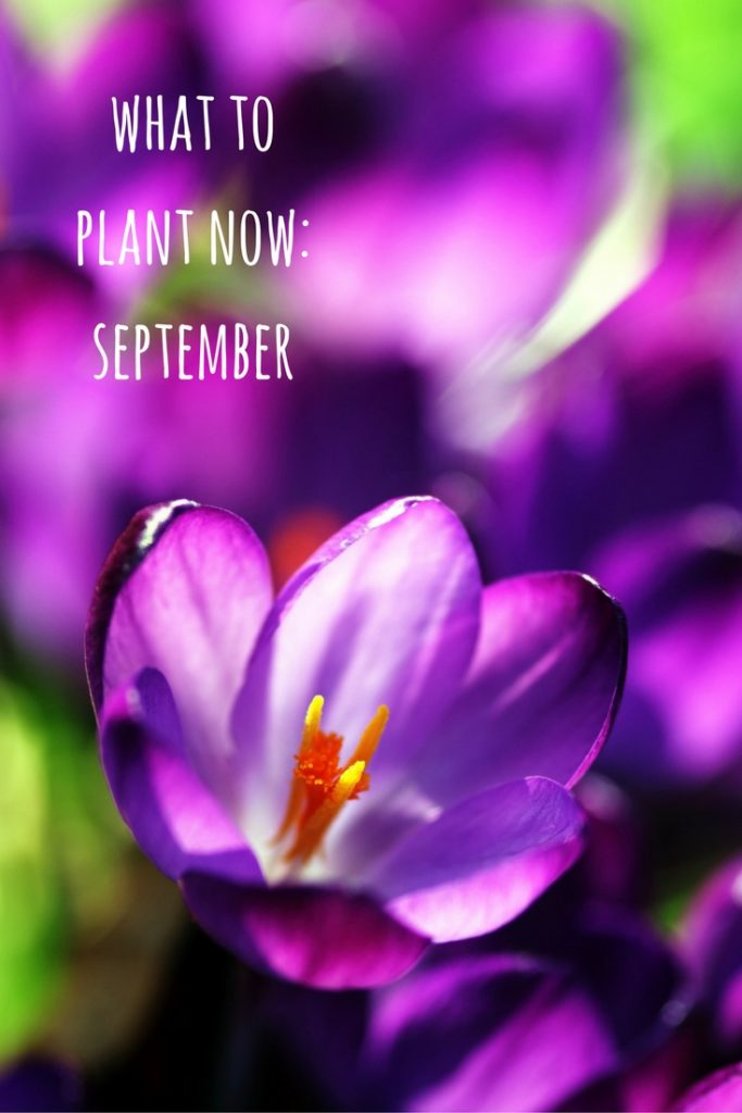 what to plant now - september