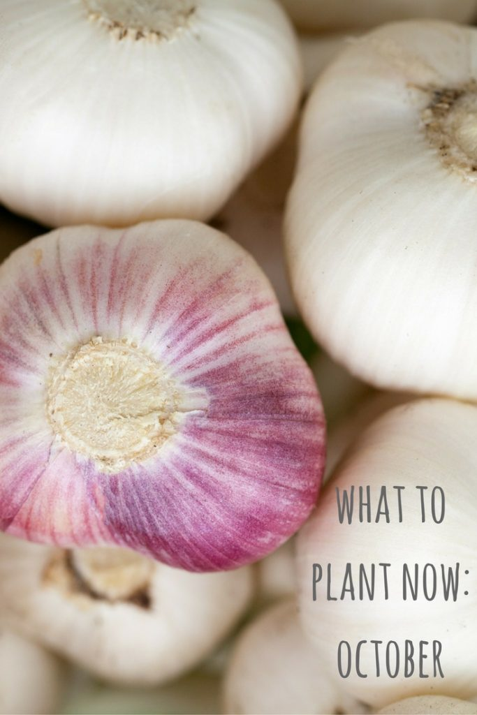what to plant now october