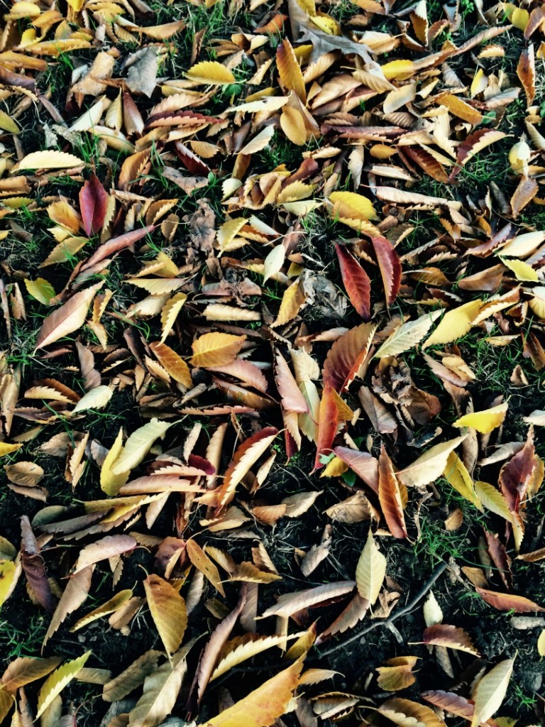 autumn leaves leaf mould