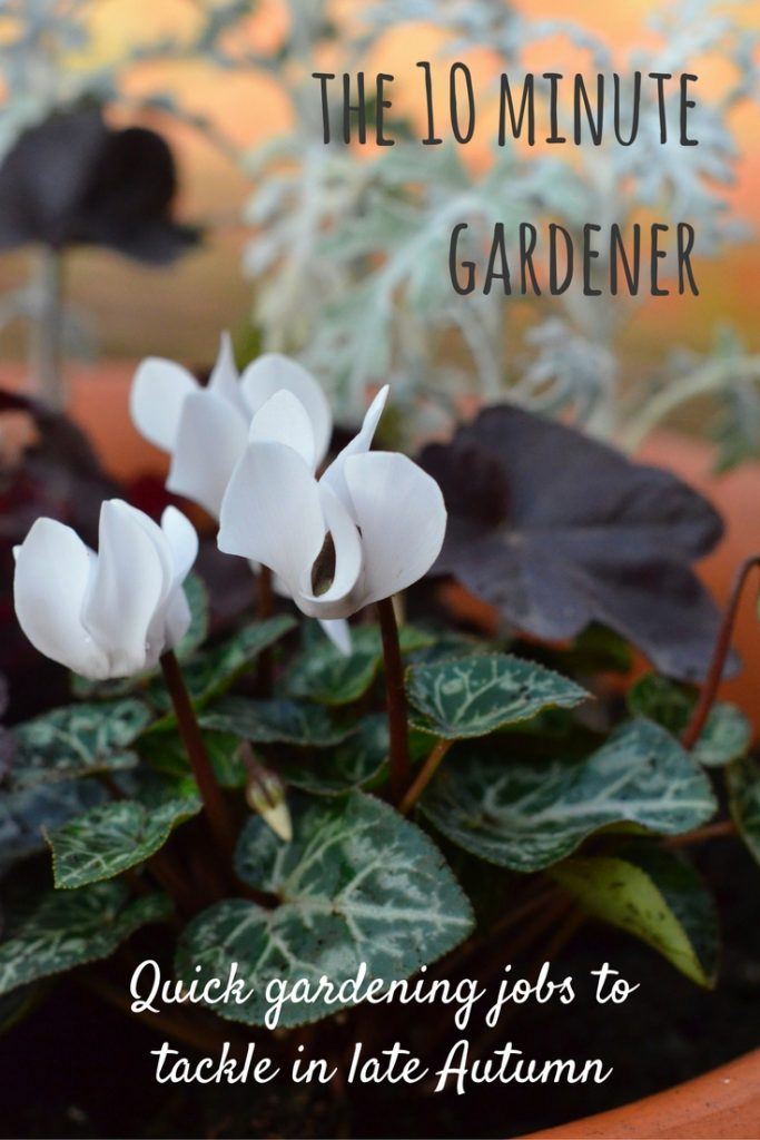 Late autumn gardening jobs with the 10 minute gardener: prepare your garden for the cold weather and the Spring that follows it with these quick jobs.