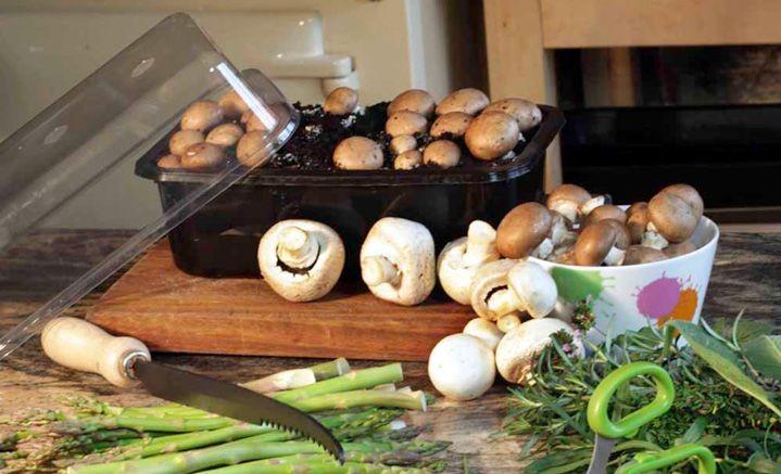 christmas gifts guide mushroom kit