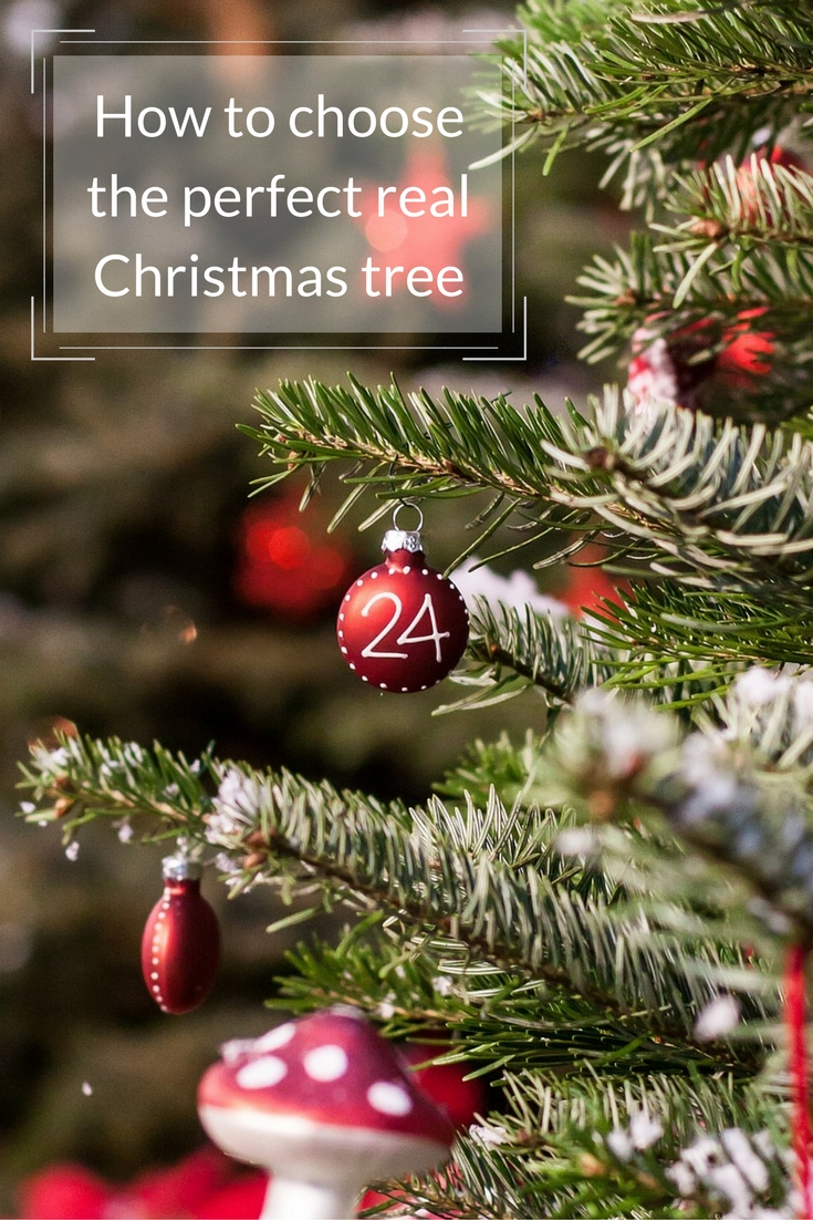 Tips for choosing a real Christmas tree