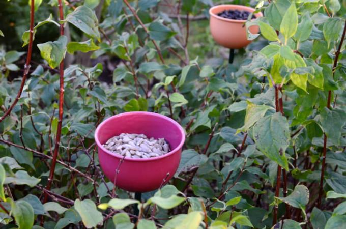 wild birds cup feeders