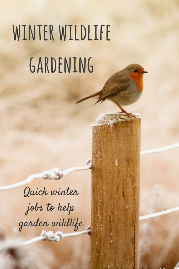 Wildlife gardening jobs for winter: ideas for quick gardening tasks that will really give local wildlife a helping hand.