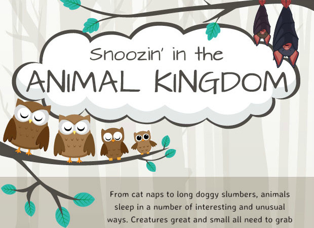 Fun Facts: Animal sleep habits