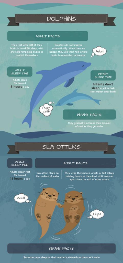 mattress next day animal sleep facts