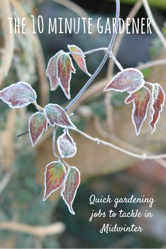 the ten minute gardener - quick gardening jobs for midwinter
