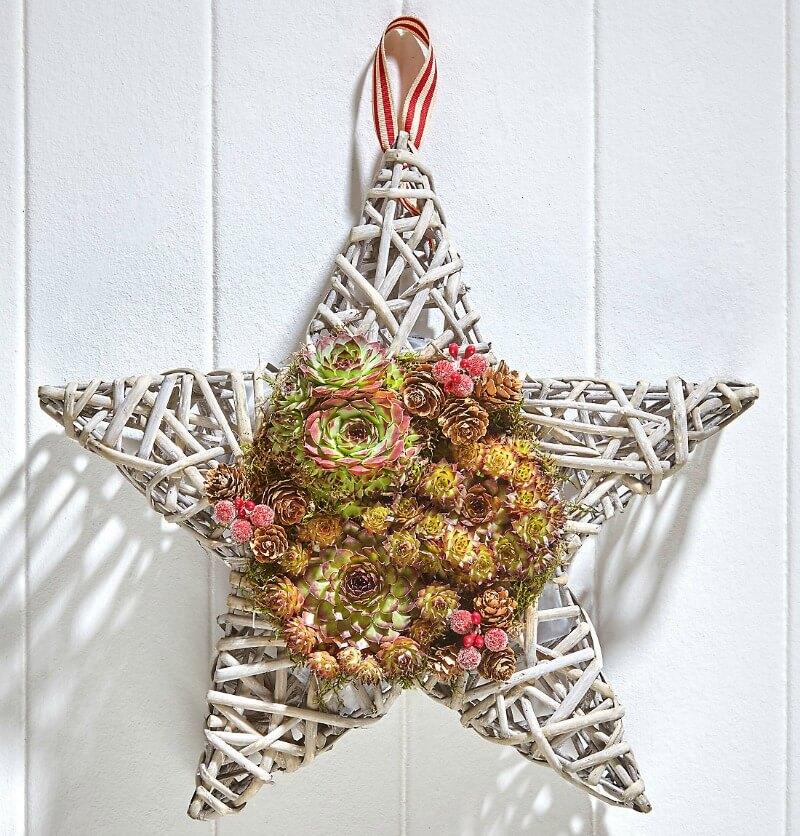 marks and spencer star sempervivum christmas wreaths