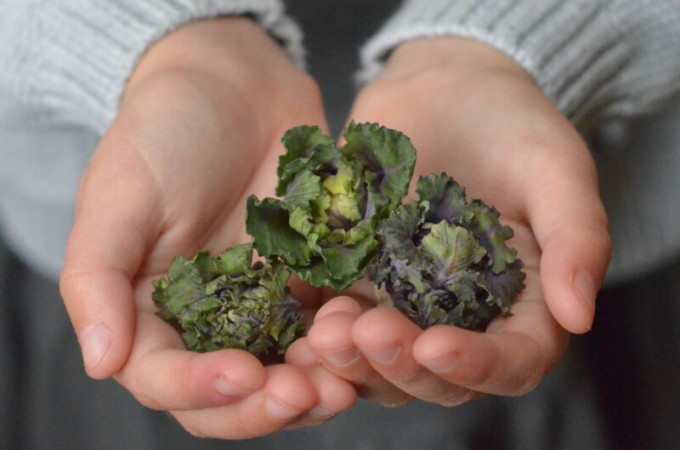 Flower Sprouts: a new vegetable for family mealtimes