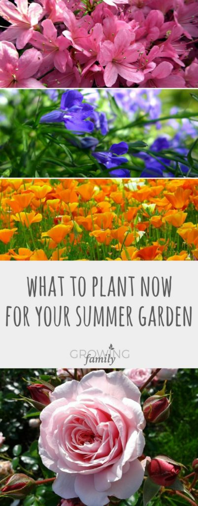 Plan for your summer garden by sowing seeds and introducing hardy plants in late winter. Check out these easy gardening tips on what to plant now for a beautiful summer garden!