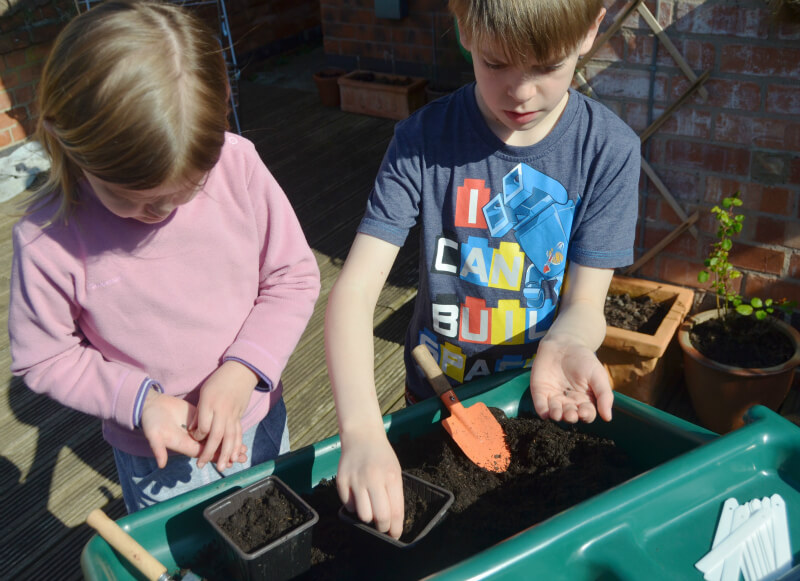 sowing winter salad seeds