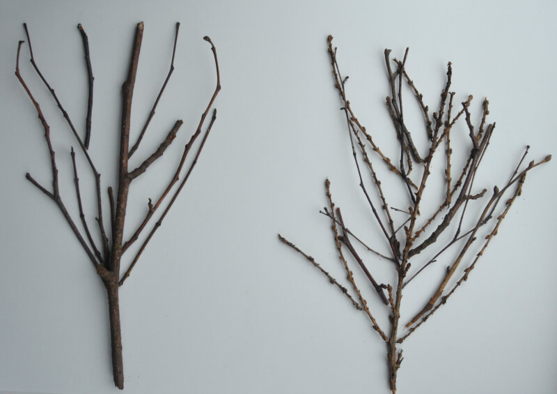 winter nature craft making a winter forest twig picture