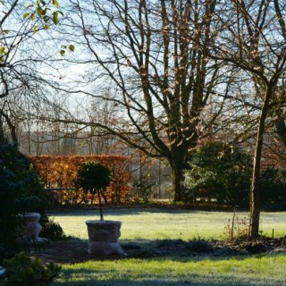 frosty winter morning in the garden