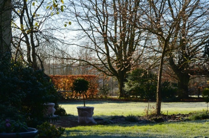 Winter gardening: how to protect tender plants