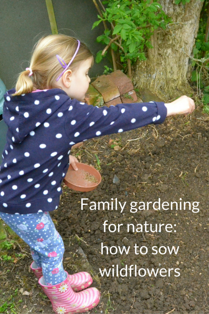 Family gardening for nature_ how to sow wildflowers