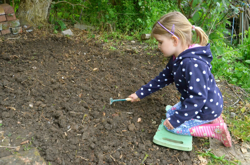 sowing wildflowers on an unused patch of land