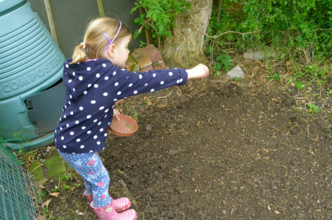 Giving nature a home in our garden: sowing wildflowers
