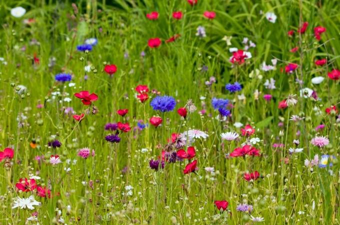 15 Inspiring garden projects