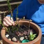 a miniature fairy garden is a great nature craft activity for children