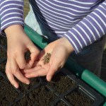 seed sowing with kids