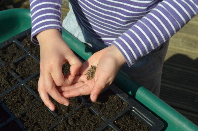 Top seeds to grow with kids