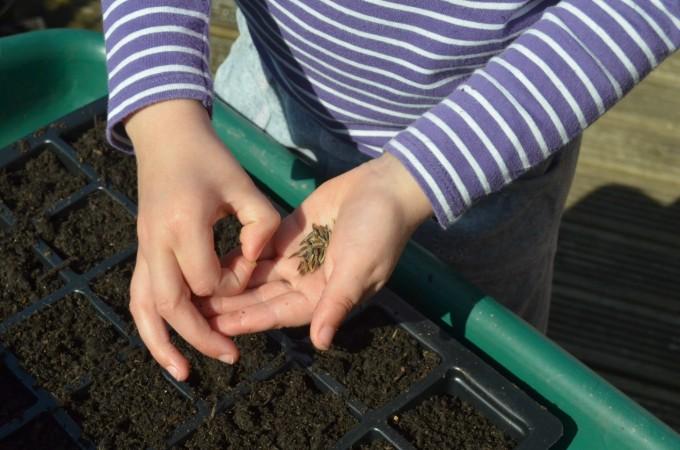 Top seeds to grow with kids