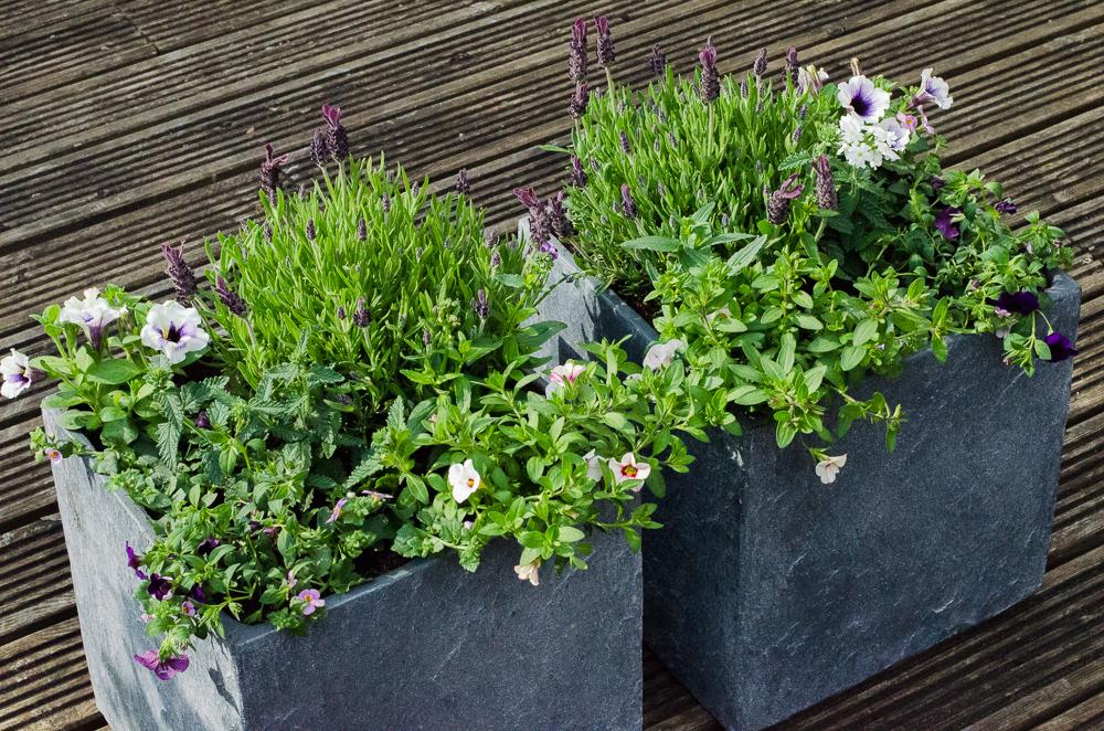 summer container gardening