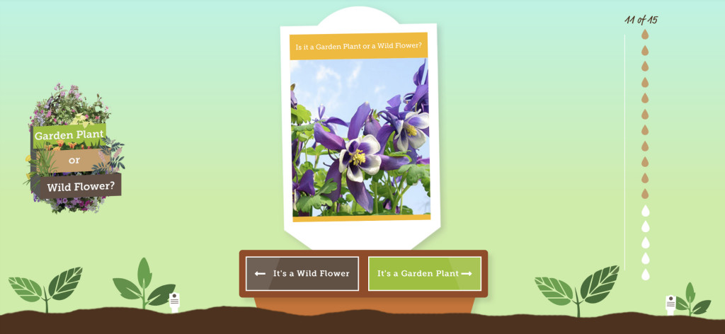 co-operative insurance hub garden plant or wild flower weeds quiz