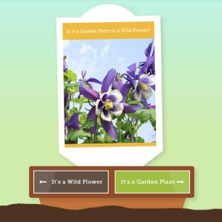 co-operative insurance hub garden plant or wild flower weed quiz