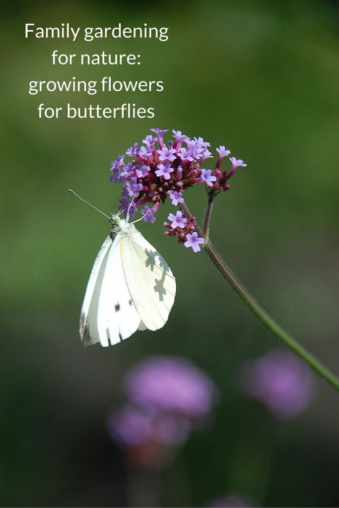 family gardening for nature - growing flowers for butterflies