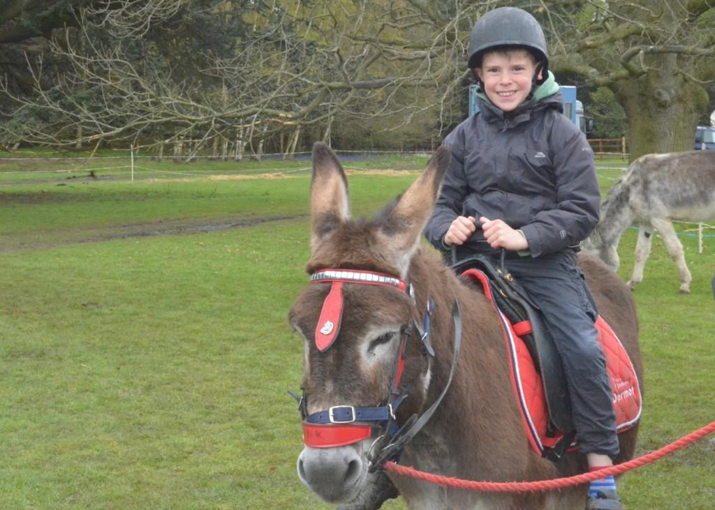 geronimo festival donkey rides