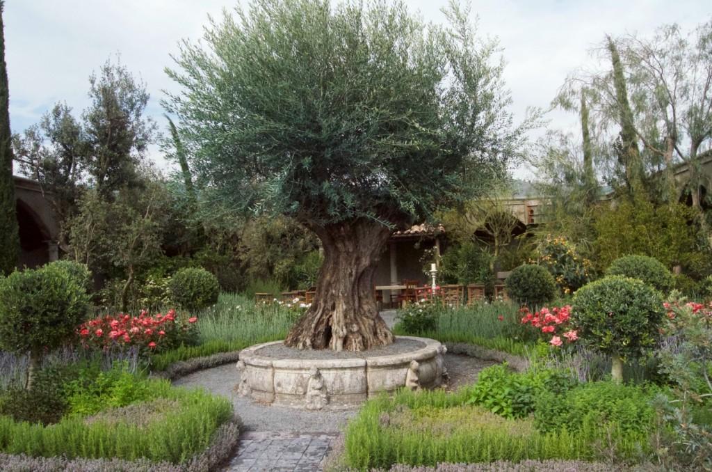 rhs malvern spring festival villaggio verde show garden